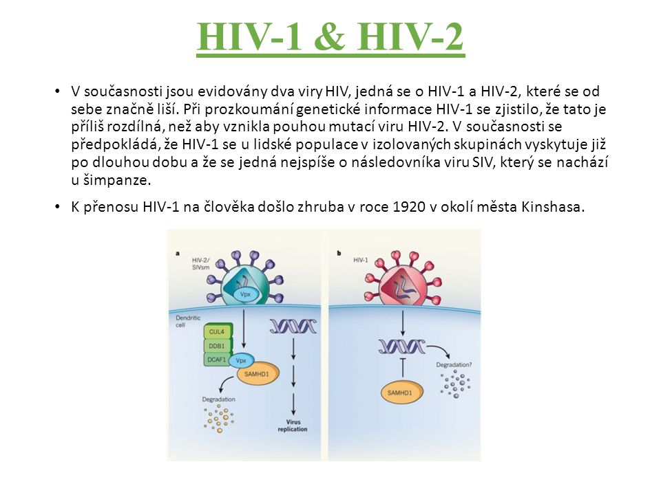HIV-1 & HIV-2 V současnosti jsou evidovány dva viry HIV, jedná se o HIV-1 a HIV-2, které se od sebe značně liší.