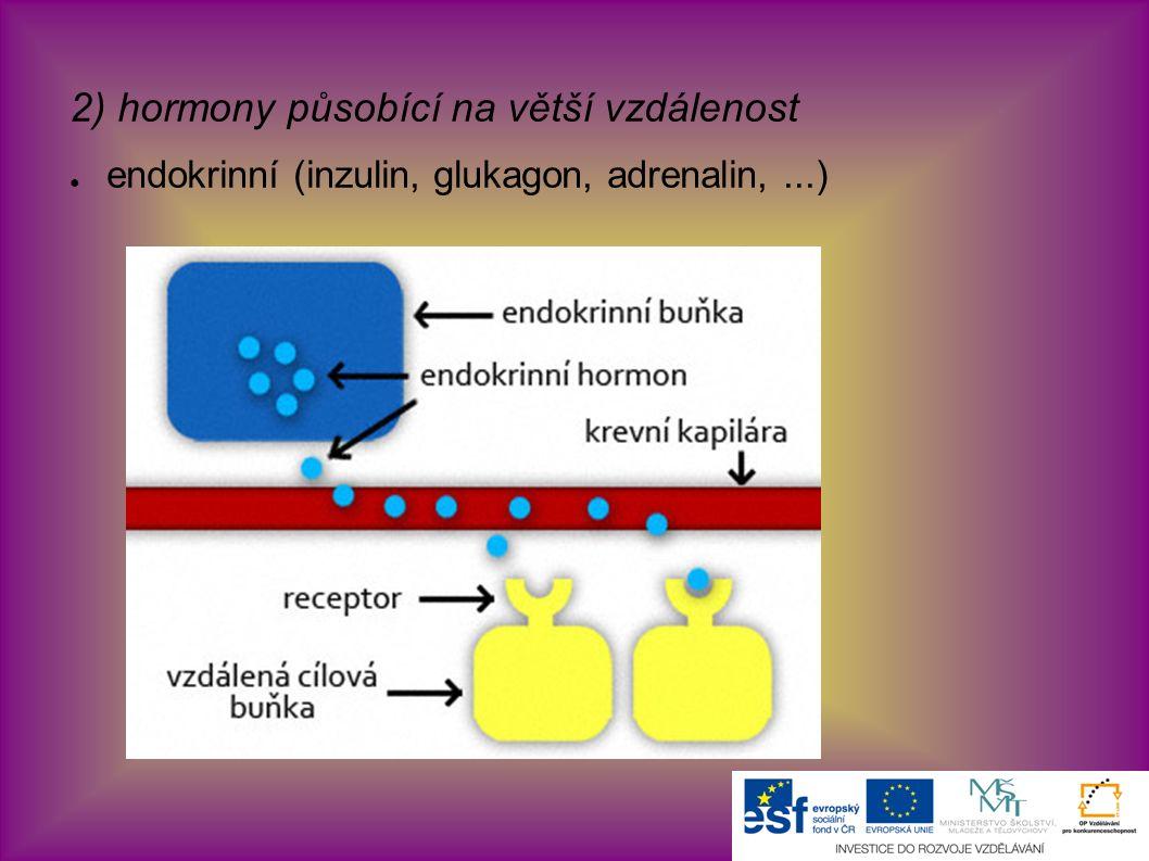 2) hormony působící na větší vzdálenost ● endokrinní (inzulin, glukagon, adrenalin,...)