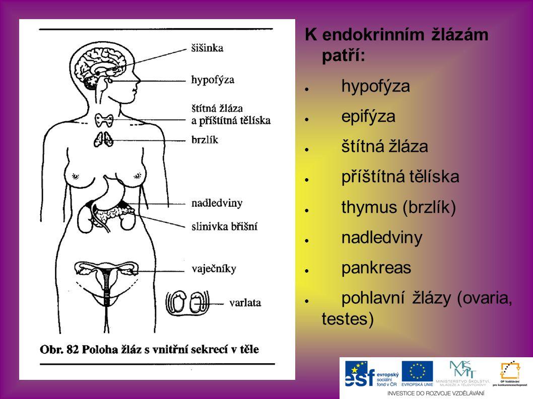 K endokrinním žlázám patří: ● hypofýza ● epifýza ● štítná žláza ● příštítná tělíska ● thymus (brzlík) ● nadledviny ● pankreas ● pohlavní žlázy (ovaria, testes)