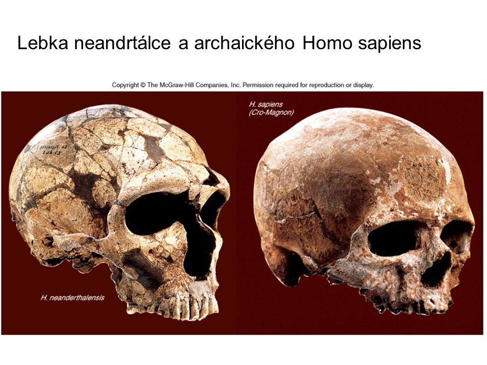 Lebka neandrtálce a archaického Homo sapiens