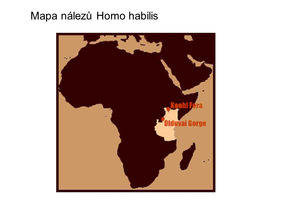 Mapa nálezů Homo habilis
