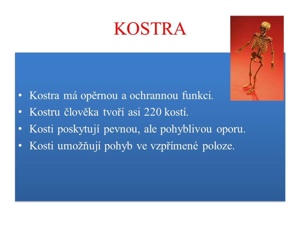 KOSTRA Kostra má opěrnou a ochrannou funkci. Kostru člověka tvoří asi 220 kostí. Kosti poskytují pevnou, ale pohyblivou oporu. Kosti umožňují pohyb ve
