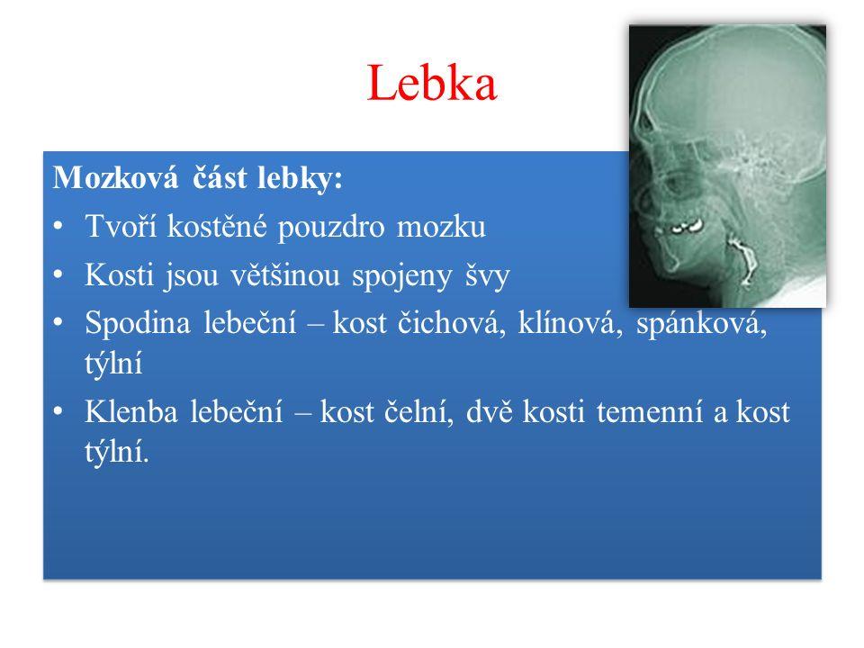 Lebka Mozková část lebky: Tvoří kostěné pouzdro mozku Kosti jsou většinou spojeny švy Spodina lebeční – kost čichová, klínová, spánková, týlní Klenba