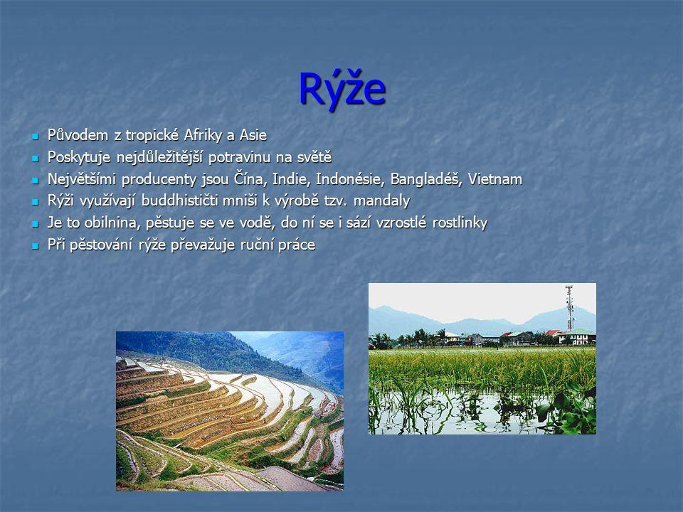 Rýže Původem z tropické Afriky a Asie Původem z tropické Afriky a Asie Poskytuje nejdůležitější potravinu na světě Poskytuje nejdůležitější potravinu na světě Největšími producenty jsou Čína, Indie, Indonésie, Bangladéš, Vietnam Největšími producenty jsou Čína, Indie, Indonésie, Bangladéš, Vietnam Rýži využívají buddhističti mniši k výrobě tzv.