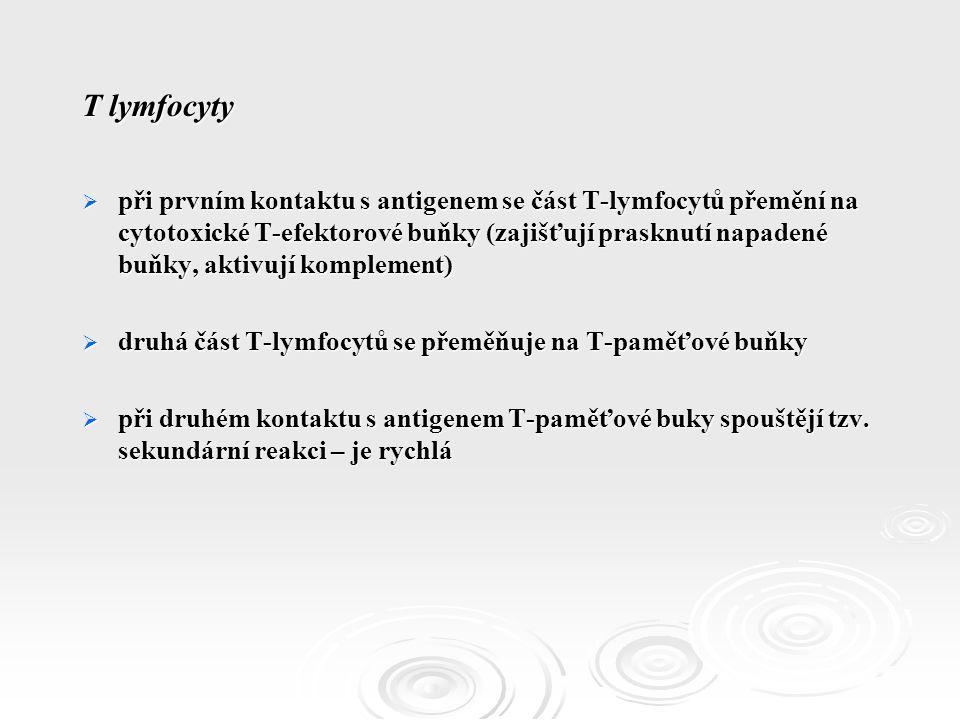 T lymfocyty  při prvním kontaktu s antigenem se část T-lymfocytů přemění na cytotoxické T-efektorové buňky (zajišťují prasknutí napadené buňky, aktivují komplement)  druhá část T-lymfocytů se přeměňuje na T-paměťové buňky  při druhém kontaktu s antigenem T-paměťové buky spouštějí tzv.