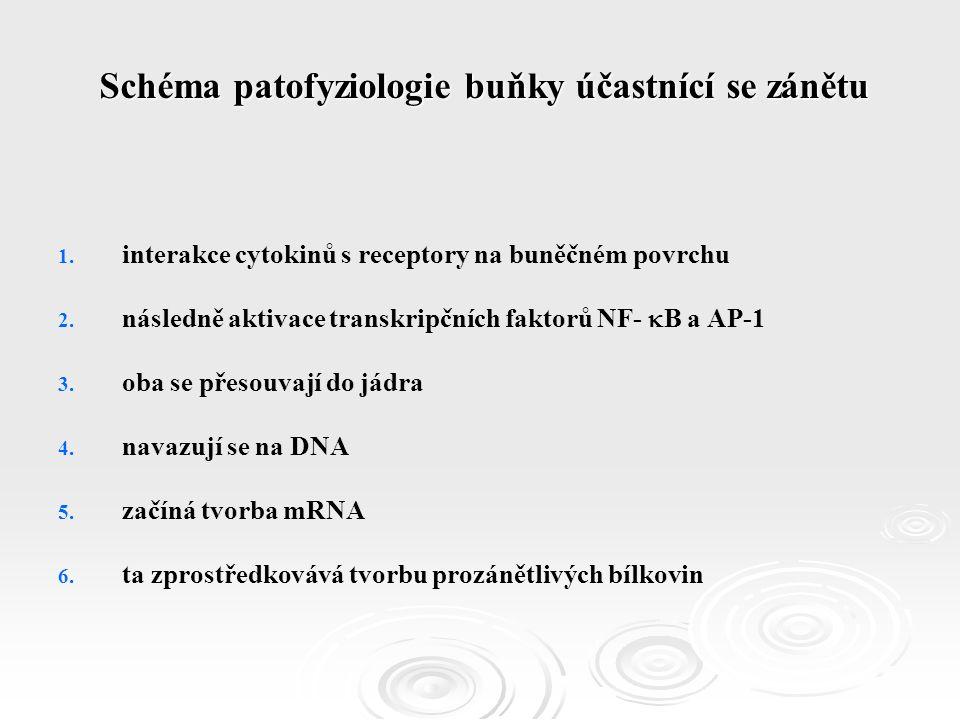 1. 1. interakce cytokinů s receptory na buněčném povrchu 2.