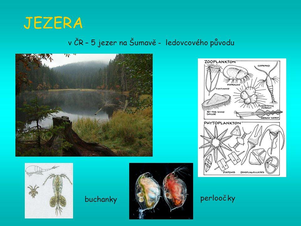 JEZERA v ČR – 5 jezer na Šumavě - ledovcového původu perloočky buchanky