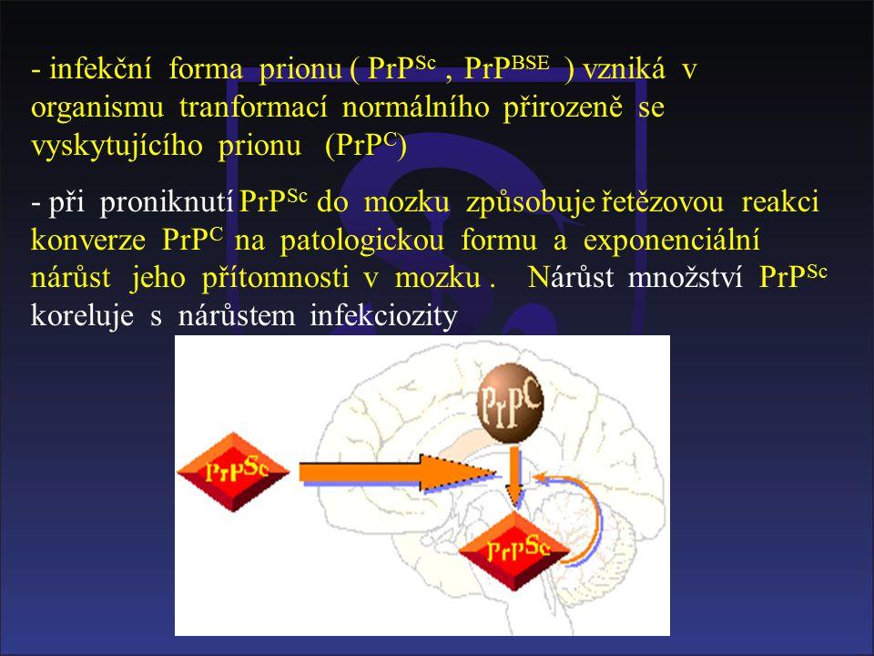 - infekční forma prionu ( PrP Sc, PrP BSE ) vzniká v organismu tranformací normálního přirozeně se vyskytujícího prionu (PrP C ) - při proniknutí PrP Sc do mozku způsobuje řetězovou reakci konverze PrP C na patologickou formu a exponenciální nárůst jeho přítomnosti v mozku.