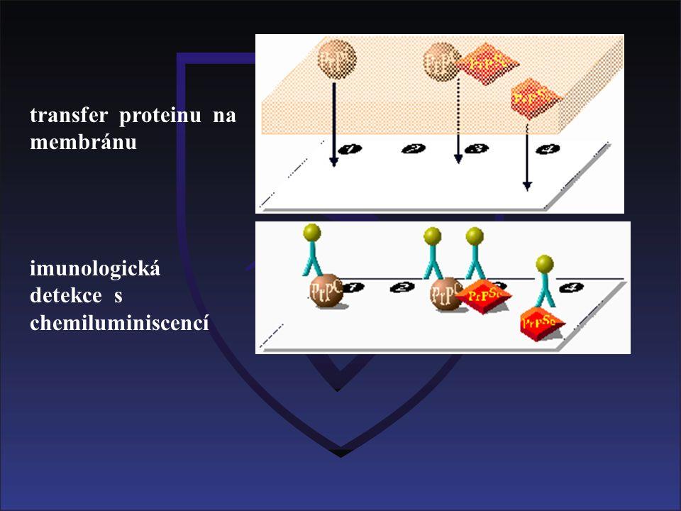 imunologická detekce s chemiluminiscencí transfer proteinu na membránu