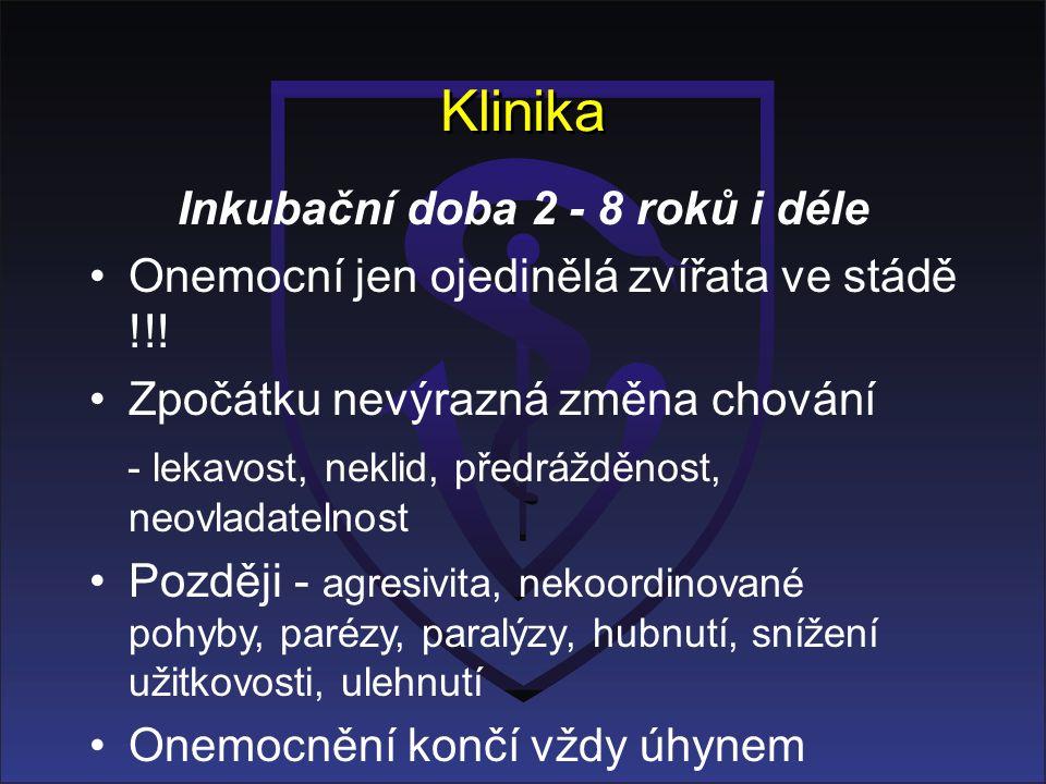 Klinika Inkubační doba 2 - 8 roků i déle Onemocní jen ojedinělá zvířata ve stádě !!.