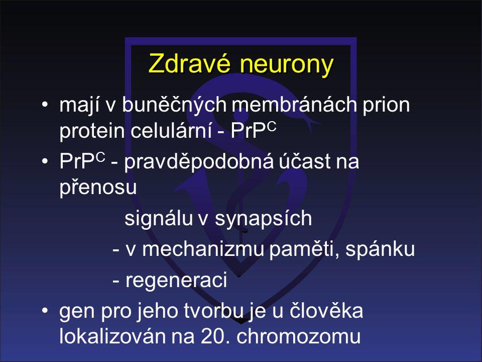 Zdravé neurony mají v buněčných membránách prion protein celulární - PrP C PrP C - pravděpodobná účast na přenosu signálu v synapsích - v mechanizmu paměti, spánku - regeneraci gen pro jeho tvorbu je u člověka lokalizován na 20.