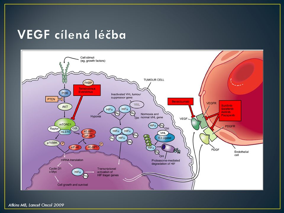 Nově zaváděná léčba přináší široké spektrum nežádoucích účinků Nezanedbatelná incidence proteinurického onemocnění ledvin (antiangiogenní léčba, mTOR) Vyšetření renální funkce včetně vyšetření moči (protein/kreatinin v moči) by mělo být provedeno před zahájením léčby a v jejím průběhu V případě významných renálních nežádoucích účinků je vhodná spolupráce s nefrologem