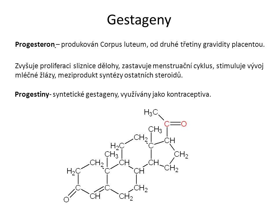 Gestageny Progesteron – produkován Corpus luteum, od druhé třetiny gravidity placentou. Zvyšuje proliferaci sliznice dělohy, zastavuje menstruační cyk