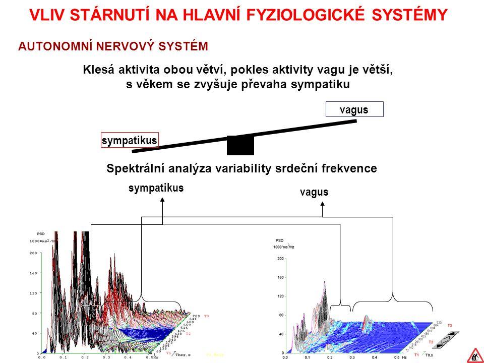 VLIV STÁRNUTÍ NA HLAVNÍ FYZIOLOGICKÉ SYSTÉMY AUTONOMNÍ NERVOVÝ SYSTÉM Klesá aktivita obou větví, pokles aktivity vagu je větší, s věkem se zvyšuje převaha sympatiku Spektrální analýza variability srdeční frekvence vagus sympatikus vagus sympatikus