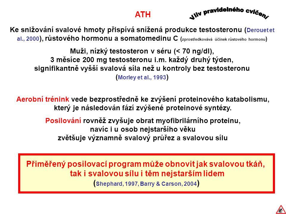 ATH Aerobní trénink vede bezprostředně ke zvýšení proteinového katabolismu, který je následován fází zvýšené proteinové syntézy.