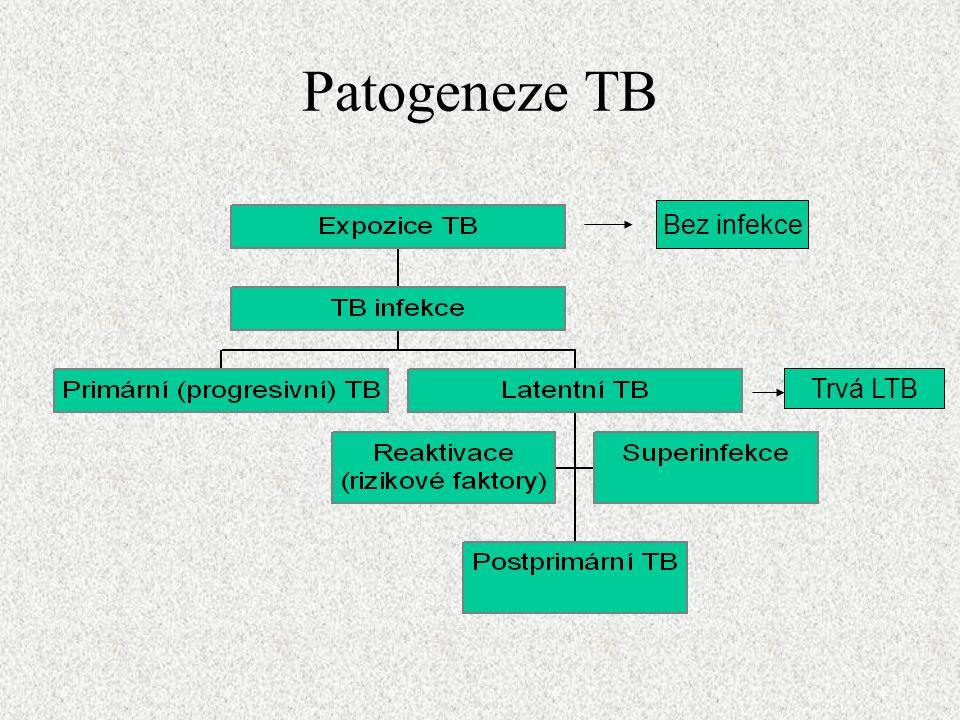 Patogeneze TB Bez infekce Trvá LTB