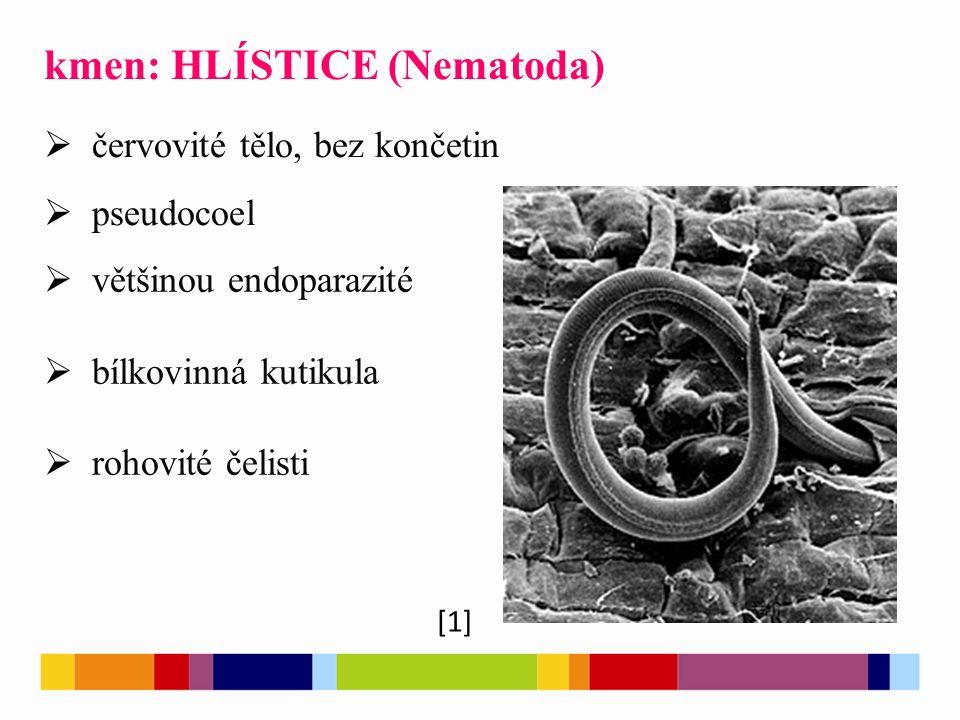 [1] kmen: HLÍSTICE (Nematoda)  červovité tělo, bez končetin  pseudocoel  většinou endoparazité  bílkovinná kutikula  rohovité čelisti