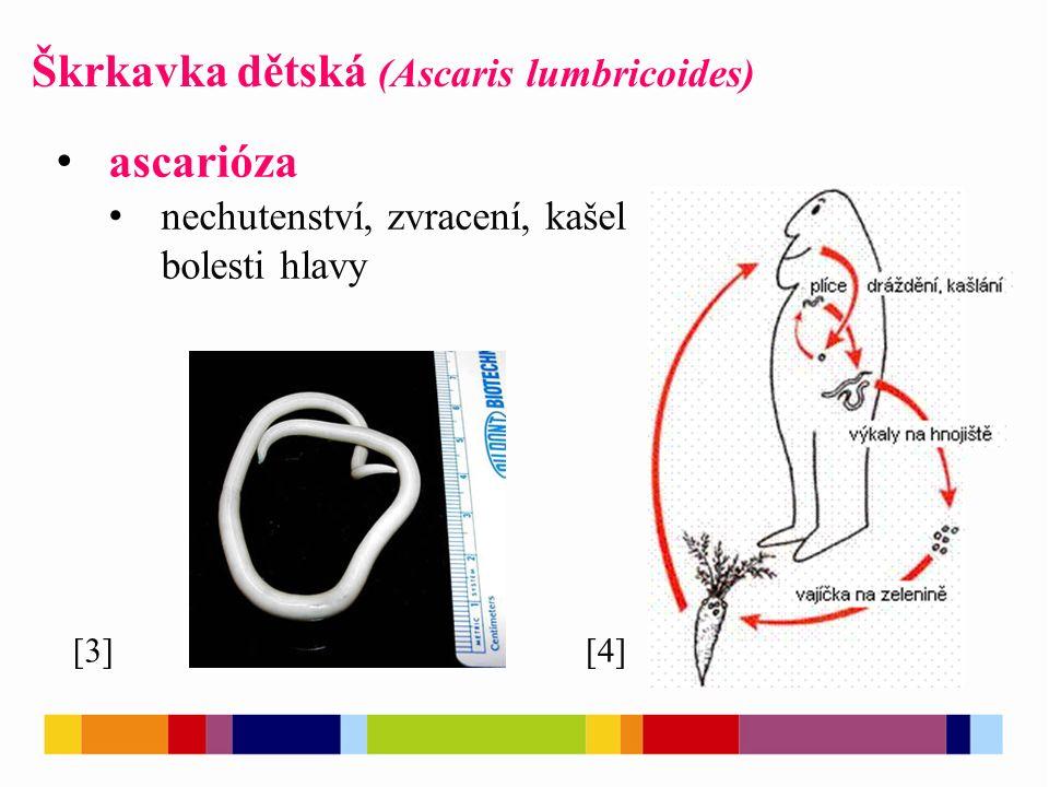 Škrkavka dětská (Ascaris lumbricoides) [4][3] ascarióza nechutenství, zvracení, kašel bolesti hlavy