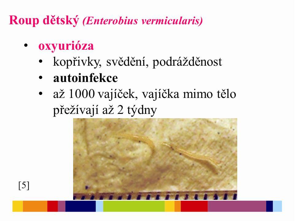 Roup dětský (Enterobius vermicularis) [5] oxyurióza kopřivky, svědění, podrážděnost autoinfekce až 1000 vajíček, vajíčka mimo tělo přežívají až 2 týdny