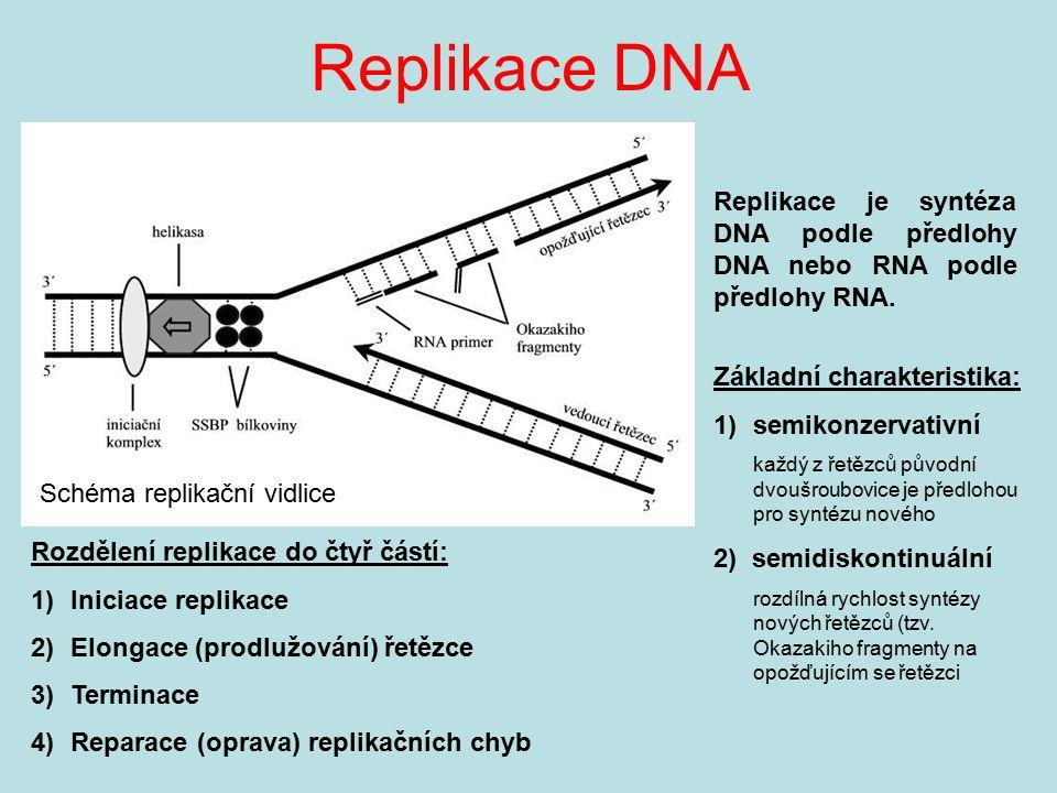 Replikace DNA Schéma replikační vidlice Základní charakteristika: 1)semikonzervativní každý z řetězců původní dvoušroubovice je předlohou pro syntézu
