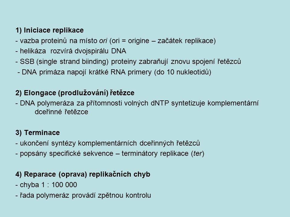 1) Iniciace replikace - vazba proteinů na místo ori (ori = origine – začátek replikace) - helikáza rozvírá dvojspirálu DNA - SSB (single strand biindi