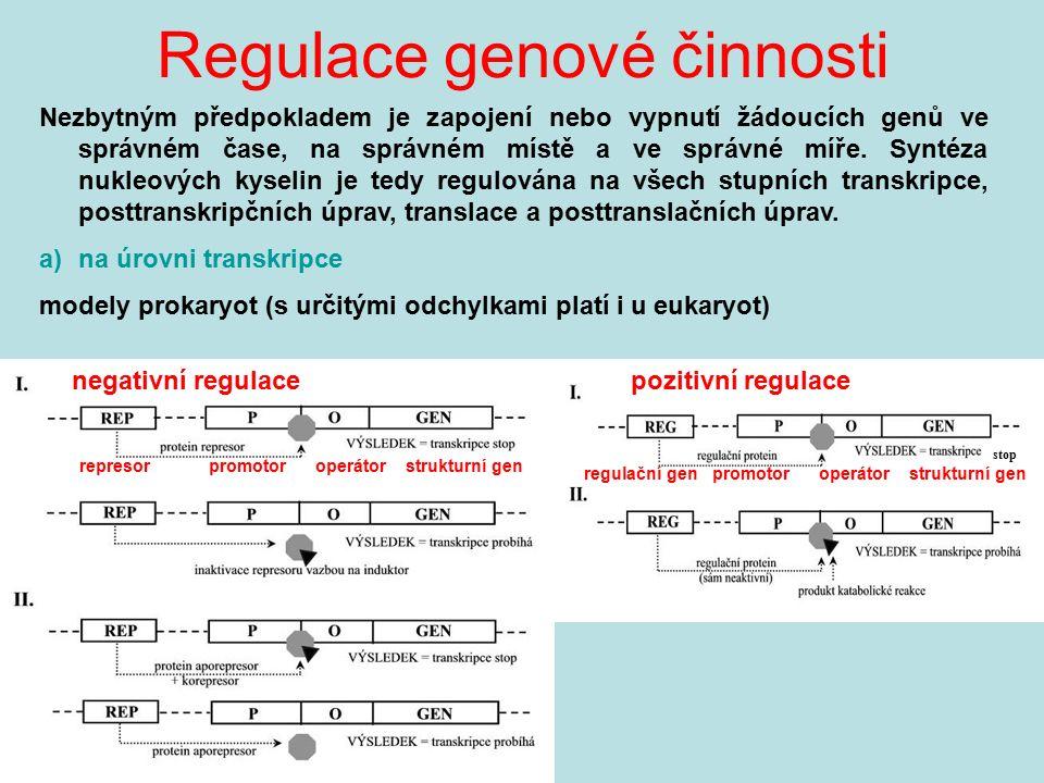 Regulace genové činnosti Nezbytným předpokladem je zapojení nebo vypnutí žádoucích genů ve správném čase, na správném místě a ve správné míře. Syntéza