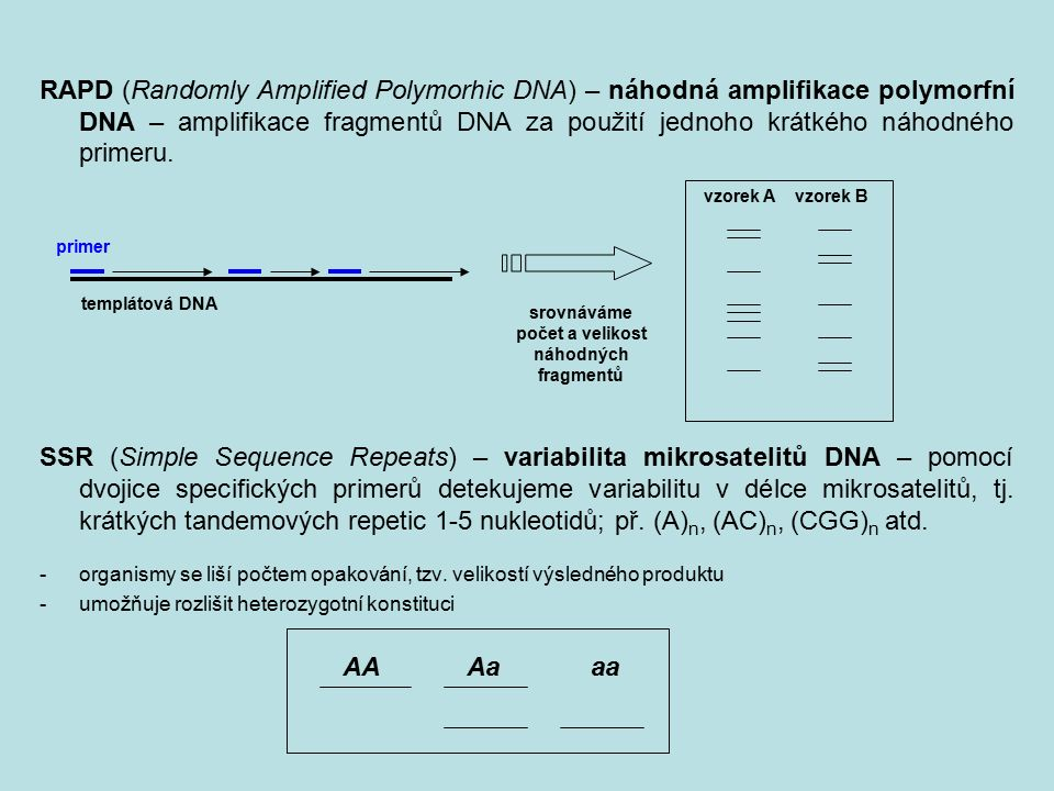 RAPD (Randomly Amplified Polymorhic DNA) – náhodná amplifikace polymorfní DNA – amplifikace fragmentů DNA za použití jednoho krátkého náhodného primeru.