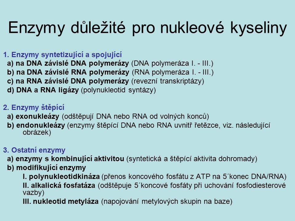 Animace transkripce http://www.youtube.com/watch?v=vJSmZ3D sntU&feature=related