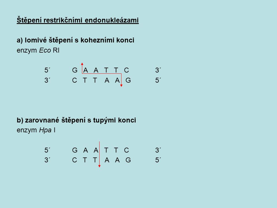 Štěpení restrikčními endonukleázami a) lomivé štěpení s kohezními konci enzym Eco RI 5´G A A T T C3´ 3´C T T A A G 5´ b) zarovnané štěpení s tupými ko