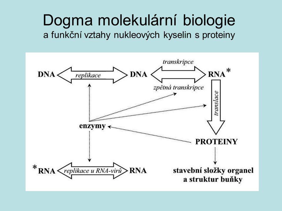 Dogma molekulární biologie a funkční vztahy nukleových kyselin s proteiny