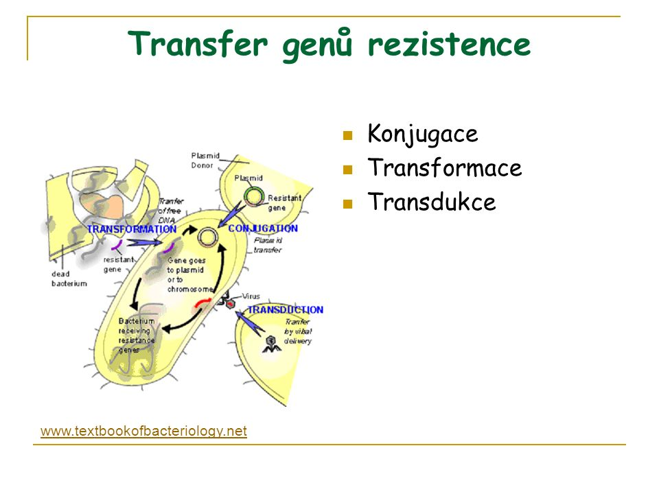 Transfer genů rezistence Konjugace Transformace Transdukce www.textbookofbacteriology.net