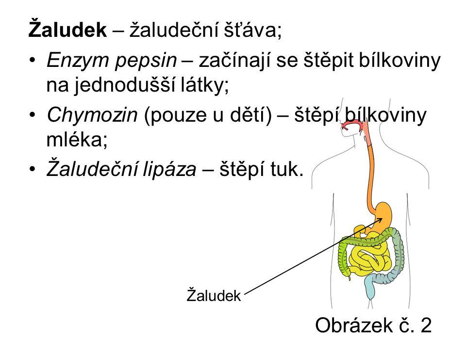 Obrázek č. 2 Žaludek – žaludeční šťáva; Enzym pepsin – začínají se štěpit bílkoviny na jednodušší látky; Chymozin (pouze u dětí) – štěpí bílkoviny mlé