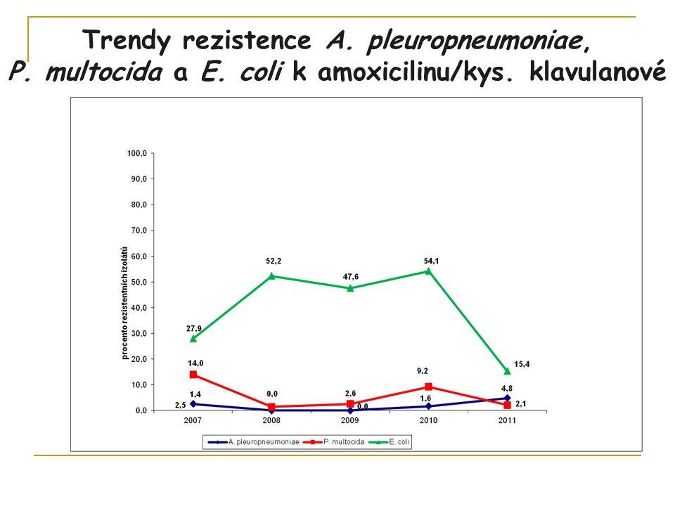 Trendy rezistence A. pleuropneumoniae, P. multocida a E. coli k amoxicilinu/kys. klavulanové