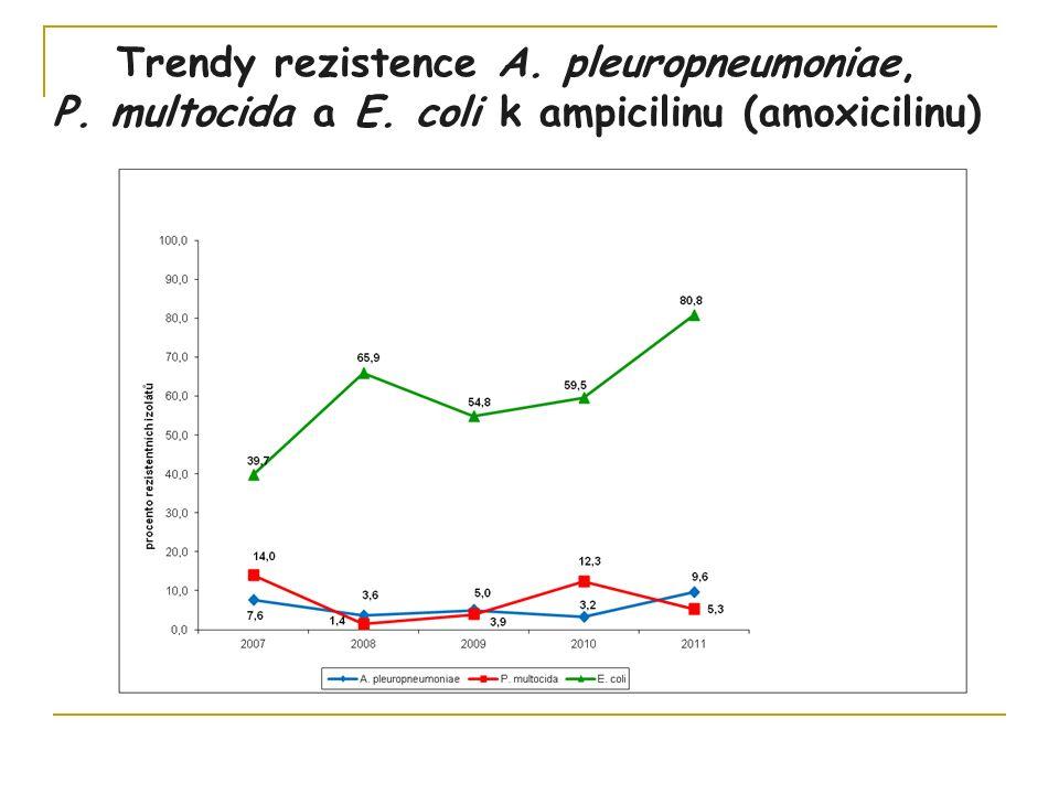 Trendy rezistence A. pleuropneumoniae, P. multocida a E. coli k ampicilinu (amoxicilinu)
