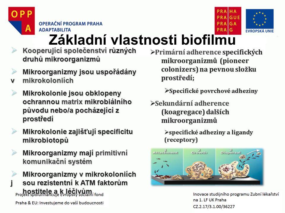  Kooperující společenství různých druhů mikroorganizmů  Mikroorganizmy jsou uspořádány v mikrokoloniích  Mikrokolonie jsou obklopeny ochrannou matrix mikrobiálního původu nebo/a pocházející z prostředí  Mikrokolonie zajišťují specificitu mikrobiotopů  Mikroorganizmy mají primitivní komunikační systém  Mikroorganizmy v mikrokoloniích jsou rezistentní k ATM faktorům hostitele a k léčivům Základní vlastnosti biofilmu  Primární adherence specifických mikroorganizmů (pioneer colonizers) na pevnou složku prostředí;  Specifické povrchové adheziny  Sekundární adherence (koagregace) dalších mikroorganizmů  specifické adheziny a ligandy (receptory)