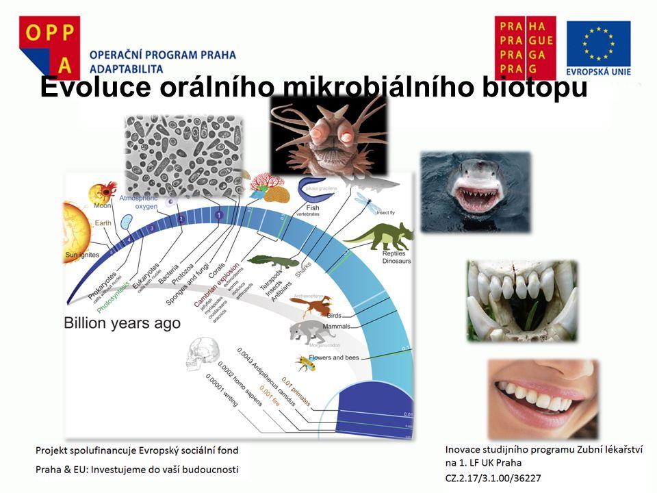 Evoluce orálního mikrobiálního biotopu