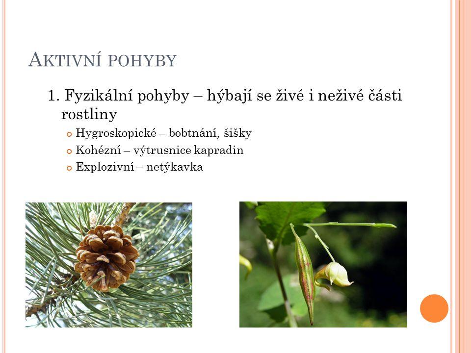 V ÝVOJ ROSTLIN Rozdělení rostlin podle délky životního cyklu Jednoleté rostliny - v jednom roce vyklíčí, plodí a odumírají Efeméry - vývoj trvá několik týdnů Letničky - celý cyklus proběhne od jara do podzimu Ozimy - naseje se na podzim, vyklíčí, přezimuje, kvete, sklizeň Dvouleté rostliny - první rok vytvoří vegetativní orgány, přezimují a ve druhém roce plodí a odumírají Vytrvalé rostliny Jednou plodící - několik let vytvářejí vegetativní orgány, potom jednou vykvetou, plodí a odumřou Opakovaně plodící trvalky (pereny) - plodí většinou už v prvním roce, nepříznivé období přečkávají pomocí oddenků, hlíz, cibulí dřeviny – žijí většinou déle než trvalky, plodí až po několika letech