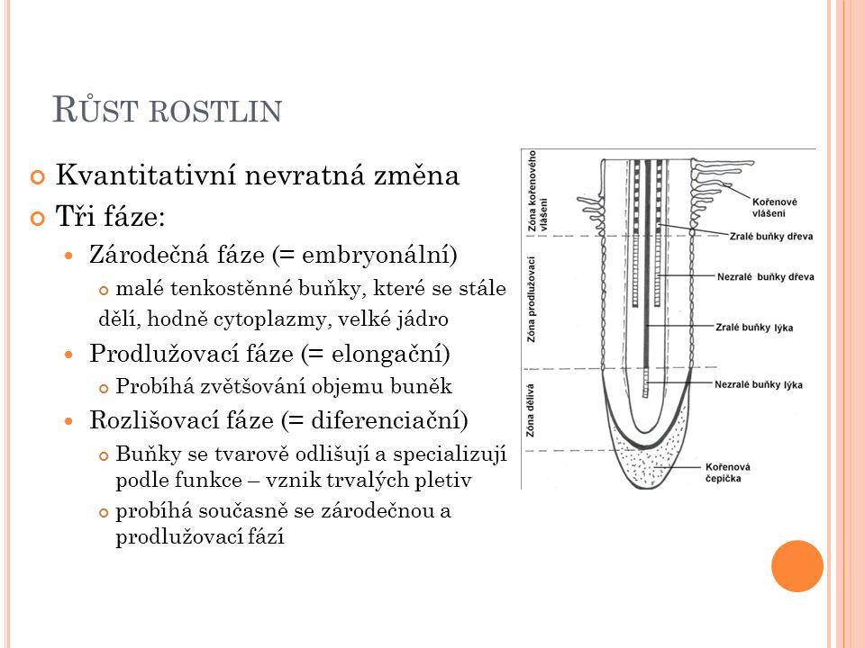 R ŮST ROSTLIN Kvantitativní nevratná změna Tři fáze: Zárodečná fáze (= embryonální) malé tenkostěnné buňky, které se stále dělí, hodně cytoplazmy, velké jádro Prodlužovací fáze (= elongační) Probíhá zvětšování objemu buněk Rozlišovací fáze (= diferenciační) Buňky se tvarově odlišují a specializují podle funkce – vznik trvalých pletiv probíhá současně se zárodečnou a prodlužovací fází