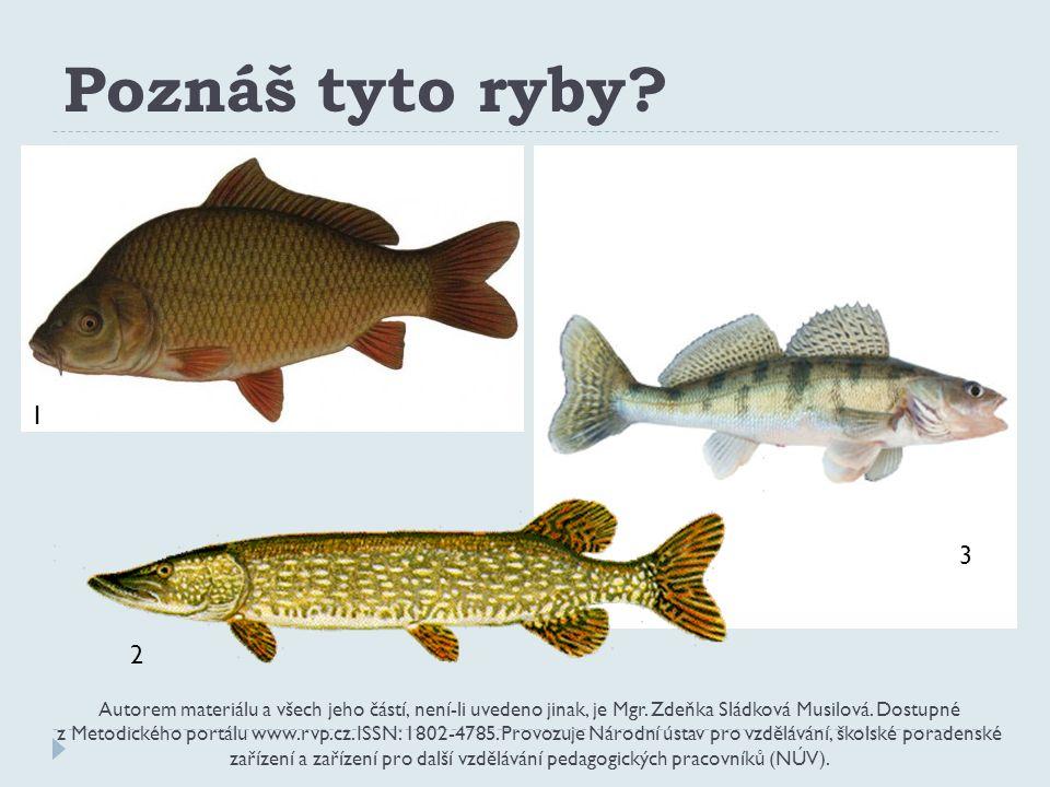 Poznáš tyto ryby. Autorem materiálu a všech jeho částí, není-li uvedeno jinak, je Mgr.