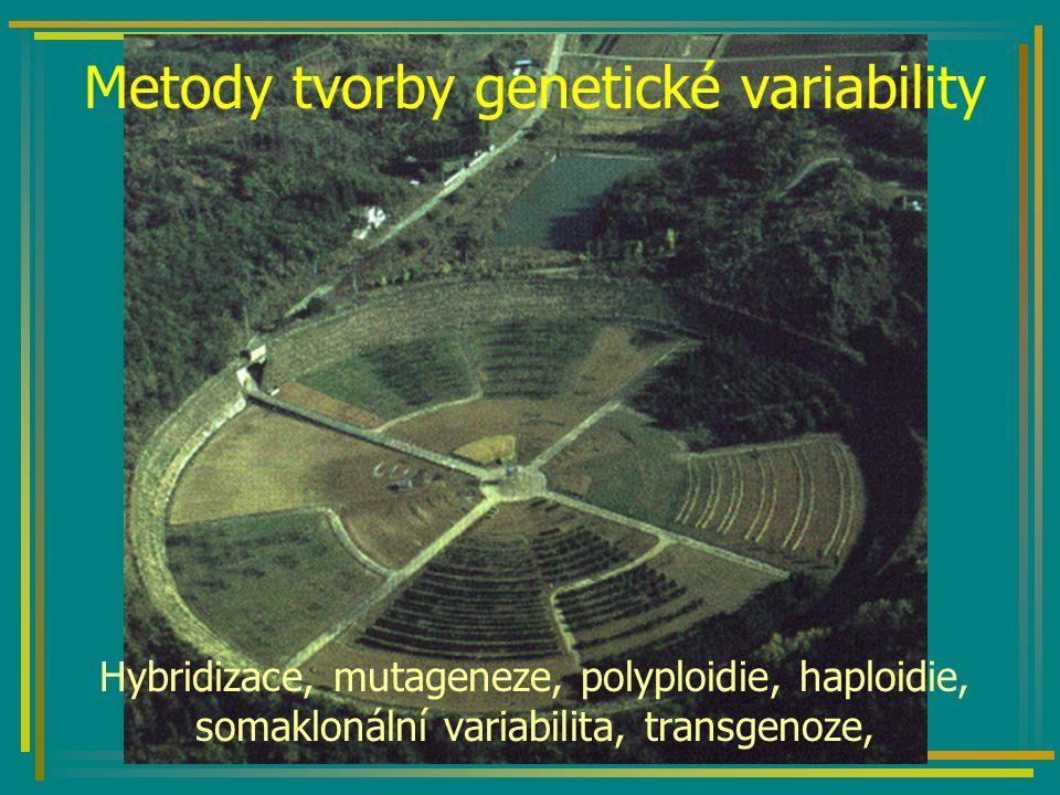 Vzdálená hybridizace Pšenice Triticum aestivum AABBDD Žito Secale cereale RR X 6n = 42 2n = 14 Sterilní hybrid ABDR 4n = 28 kolchicin 8n = 56 Tritikale (oktaploidní) AABBDDRR