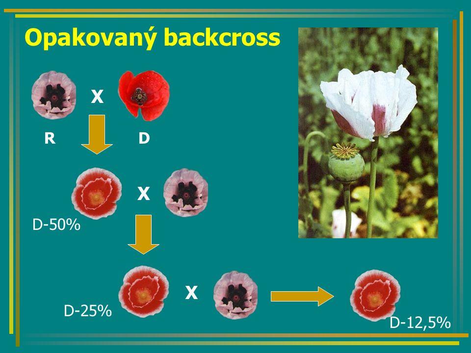 Opakovaný backcross X X X D-50% D-25% D-12,5% RD