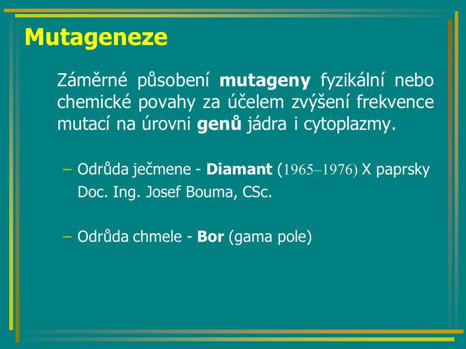 Mutageneze Záměrné působení mutageny fyzikální nebo chemické povahy za účelem zvýšení frekvence mutací na úrovni genů jádra i cytoplazmy. –Odrůda ječm