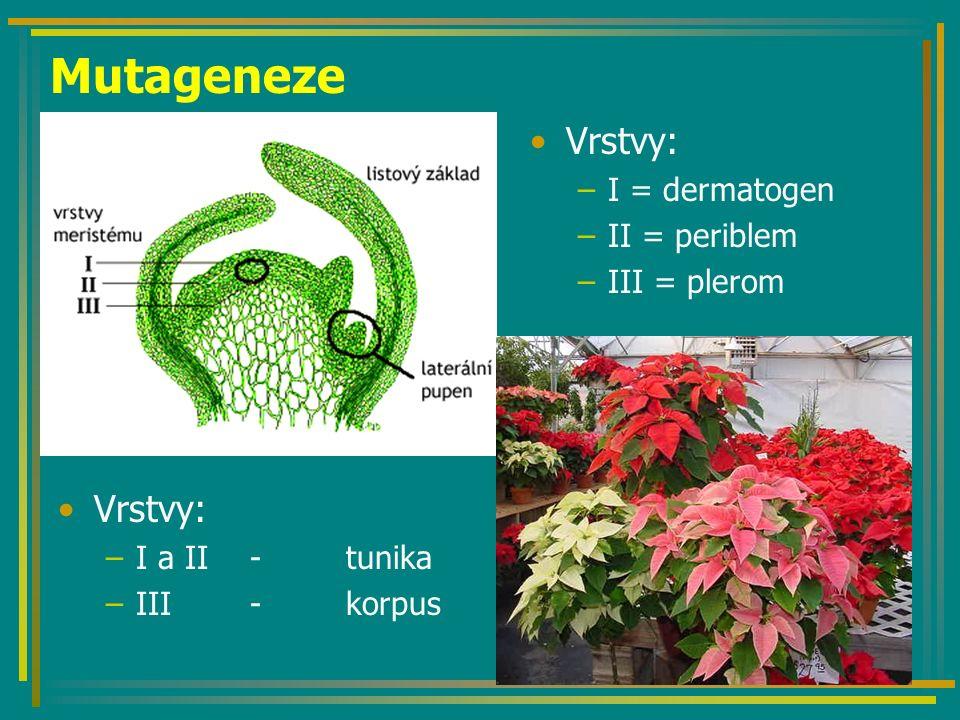 Mutageneze Vrstvy: –I = dermatogen –II = periblem –III = plerom Vrstvy: –I a II - tunika –III - korpus