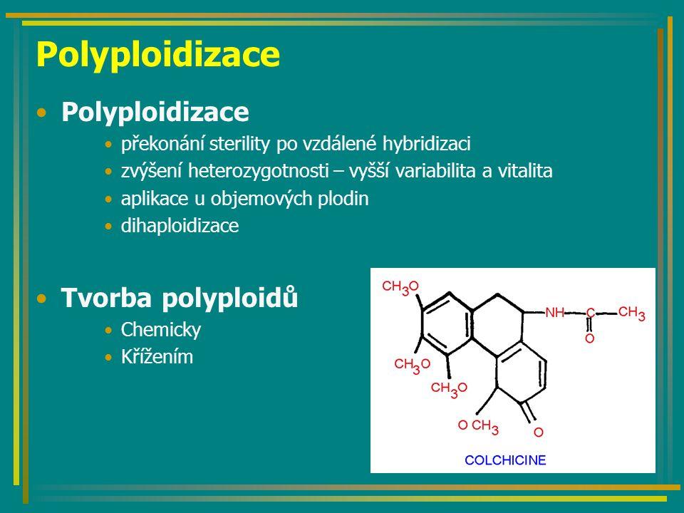 Polyploidizace překonání sterility po vzdálené hybridizaci zvýšení heterozygotnosti – vyšší variabilita a vitalita aplikace u objemových plodin dihaploidizace Tvorba polyploidů Chemicky Křížením
