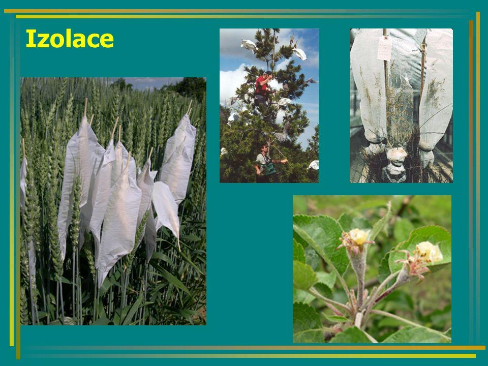 Získání pylu: otrhání květů opatrné sušení (uvolnění pylu) vytřepání a uschování pylu Opylení: přenos pylu na bliznu (fixírkou, štětcem, apod.) Izolace: Lze využít také CMS (Cytoplasmatic Male Sterility) řepka, kukuřice, mrkev, cibule a cukrovky nahrazuje obtížnou kastraci využití zejména ve šlechtění na heterozi Křížení