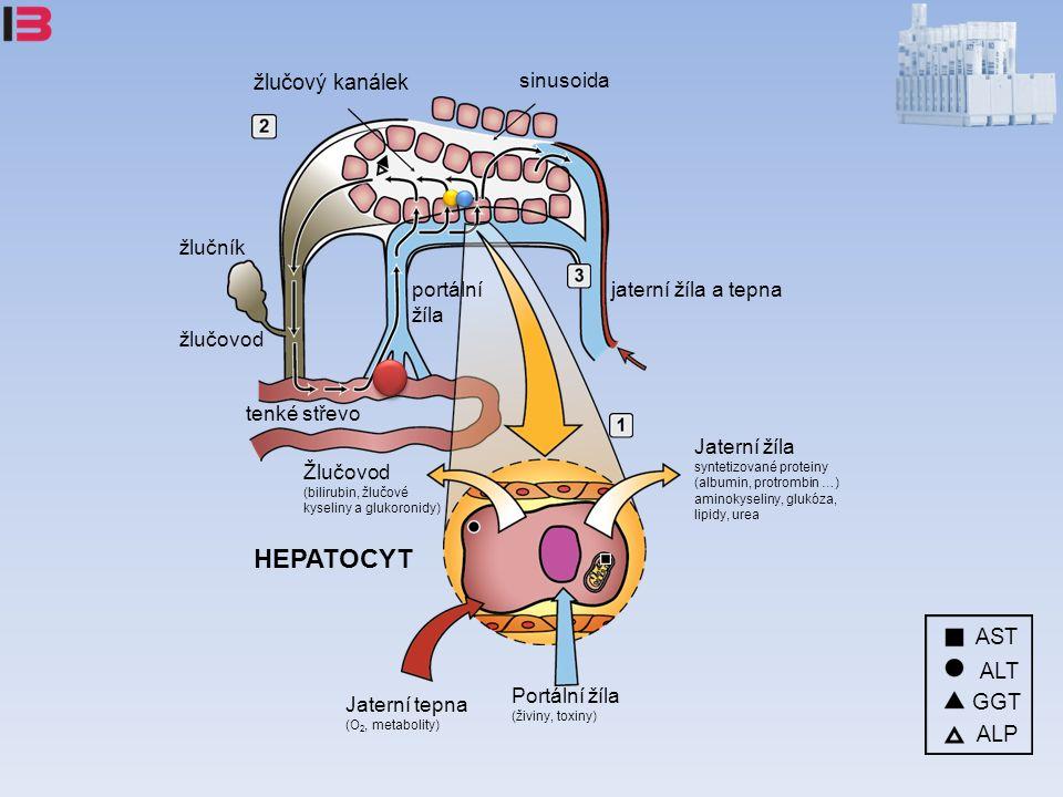 žlučový kanálek sinusoida portální žíla žlučník žlučovod tenké střevo jaterní žíla a tepna HEPATOCYT Jaterní žíla syntetizované proteiny (albumin, protrombin …) aminokyseliny, glukóza, lipidy, urea Žlučovod (bilirubin, žlučové kyseliny a glukoronidy) Portální žíla (živiny, toxiny) Jaterní tepna (O 2, metabolity) ALP AST ALT GGT