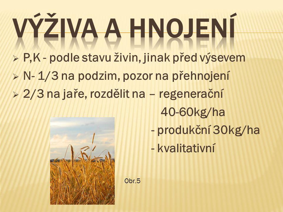  P,K - podle stavu živin, jinak před výsevem  N- 1/3 na podzim, pozor na přehnojení  2/3 na jaře, rozdělit na – regenerační 40-60kg/ha - produkční 30kg/ha - kvalitativní Obr.5