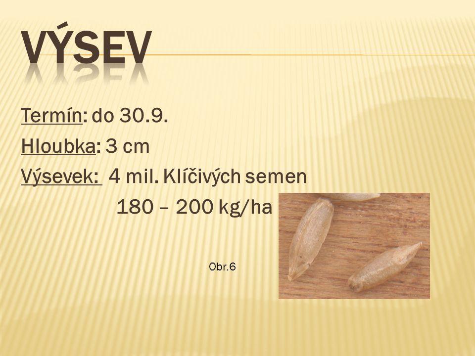 Termín: do 30.9. Hloubka: 3 cm Výsevek: 4 mil. Klíčivých semen 180 – 200 kg/ha Obr.6