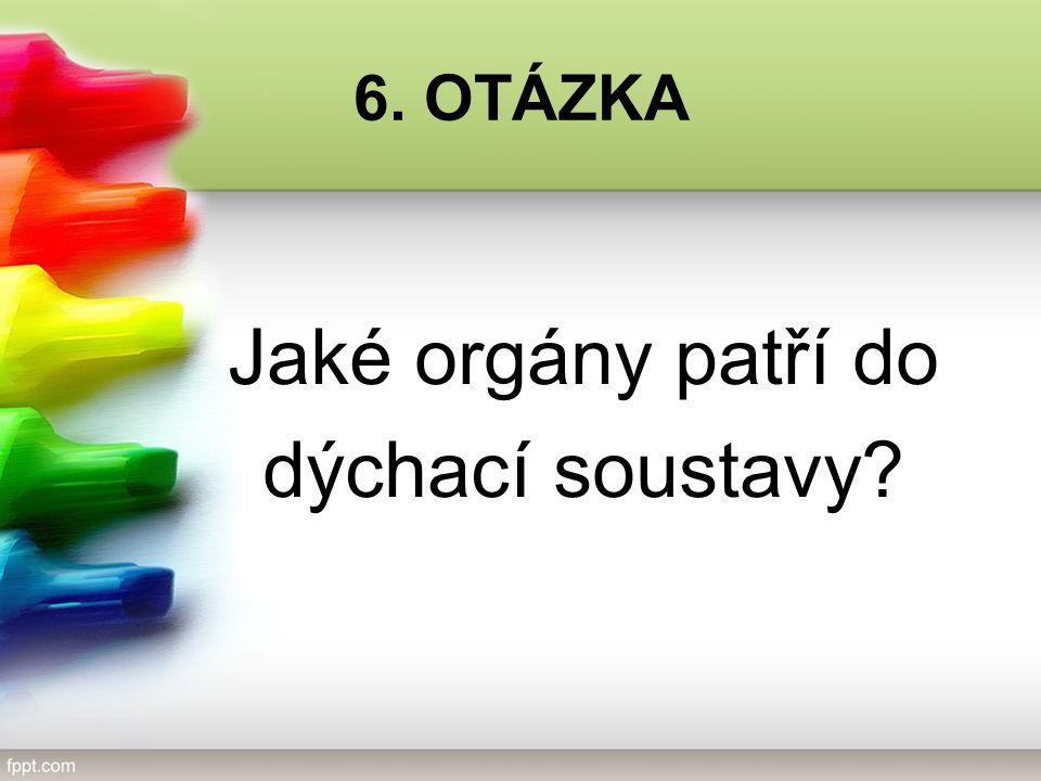 6. OTÁZKA Jaké orgány patří do dýchací soustavy?