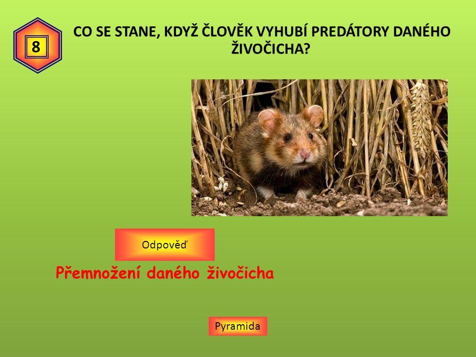 Pyramida Přemnožení daného živočicha Odpověď 8 CO SE STANE, KDYŽ ČLOVĚK VYHUBÍ PREDÁTORY DANÉHO ŽIVOČICHA